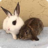 Adopt A Pet :: Tadpole & Lillypad - Bonita, CA