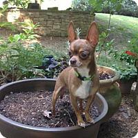 Adopt A Pet :: Randall - Atlanta, GA