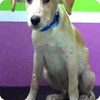 Adopt A Pet :: Jack-ADOPTION PENDING - Boulder, CO