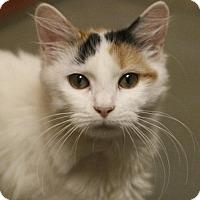 Adopt A Pet :: Bridin - Marlborough, MA