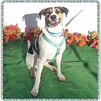 Adopt A Pet :: DOMINO - Marietta, GA