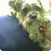 Adopt A Pet :: TYLON - Atlanta, GA