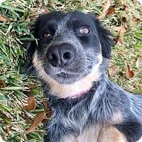 Adopt A Pet :: Nutmeg in Texarkana Texas - Texarkana, TX