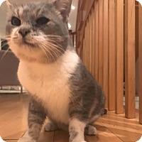 Adopt A Pet :: Alastor