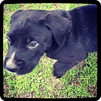 Adopt A Pet :: Jericho - Grand Bay, AL