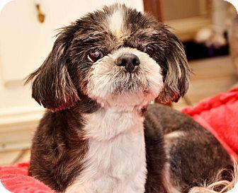 Lhasa Apso Mix Dog for adoption in Houston, Texas - Brooks Barker