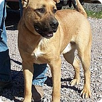 Adopt A Pet :: Valiant - Golden Valley, AZ