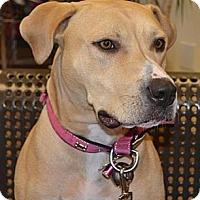 Adopt A Pet :: Sugar Jam - Southampton, PA
