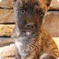 Adopt A Pet :: Cadence - Wytheville, VA