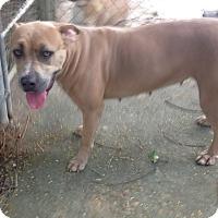 Adopt A Pet :: Marquesa - Key Biscayne, FL
