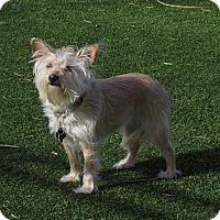 Adopt A Pet :: Jilli - Meridian, ID