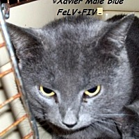 Adopt A Pet :: Xavier - Hazard, KY