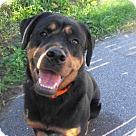 Adopt A Pet :: Tara