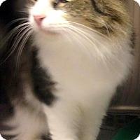Adopt A Pet :: Captain - Chattanooga, TN