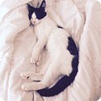 Adopt A Pet :: Lancelot - Manchester, CT