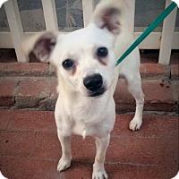Adopt A Pet :: Chevy - Santa Ana, CA