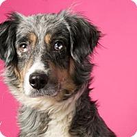 Adopt A Pet :: Bee - Roanoke, VA