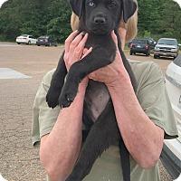 Adopt A Pet :: Noah - Groton, MA