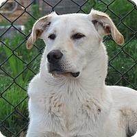 Adopt A Pet :: Sheldon - El Paso, TX