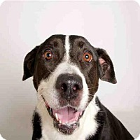 Adopt A Pet :: RAQUEL - Murray, UT
