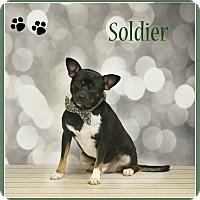 Adopt A Pet :: Soldier - Elburn, IL