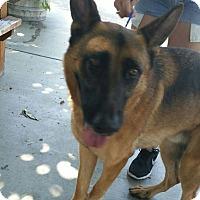 Adopt A Pet :: Pharoah - San Diego, CA