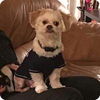 Adopt A Pet :: Milo - Ft. Lauderdale, FL
