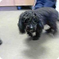 Adopt A Pet :: A692278 - Sacramento, CA