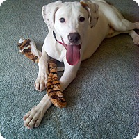 Adopt A Pet :: Monty - West Allis, WI
