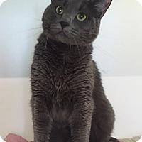 Adopt A Pet :: Smoke - Colorado Springs, CO