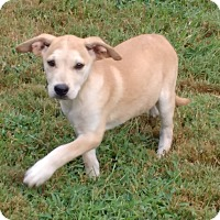 Adopt A Pet :: Dixie - Warrenton, NC