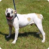 Adopt A Pet :: Hercules - Lebanon, ME