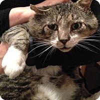 Adopt A Pet :: Bubba Loves Ya!! Perm Lion Cut Look! - Brooklyn, NY