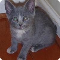 Adopt A Pet :: dori and trika - Centreville, VA