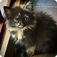 Adopt A Pet :: Dahlia - Gainesville, FL