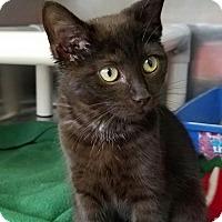 Adopt A Pet :: Panera - Elyria, OH