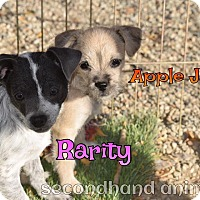 Adopt A Pet :: Rarity - Rosamond, CA