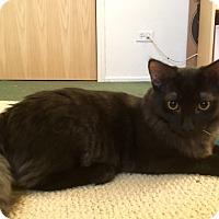 Adopt A Pet :: Luke - Barrington Hills, IL