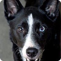 Adopt A Pet :: Lady Love - Bradenton, FL