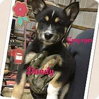 Adopt A Pet :: Dandy - Brunswick, ME