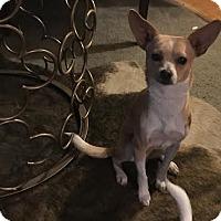 Adopt A Pet :: Frederick - Beverly Hills, CA