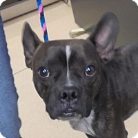 Adopt A Pet :: 49165 Timber adoption $150 plus tags - Zanesville, OH