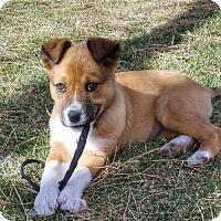 Adopt A Pet :: Crouton - Littleton, CO