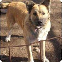 Adopt A Pet :: Thunder - Glenpool, OK
