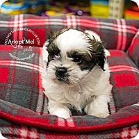 Adopt A Pet :: Cloe - Mesa, AZ
