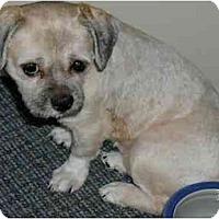 Adopt A Pet :: DannyBoy - Homer Glen, IL