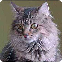 Adopt A Pet :: Lena (charmer!) - Portland, OR