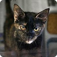 Adopt A Pet :: Blossom & Pandora - Chesapeake, VA
