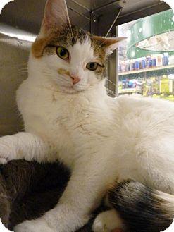 Calico Cat for adoption in Capshaw, Alabama - Dottie