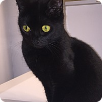 Adopt A Pet :: Kishka (in CT) - East Hartford, CT